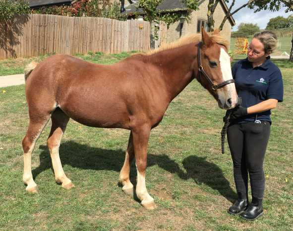 World Horse Welfare Fizz New Forest Mare Glenda